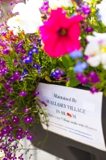 Close up sign flowers