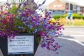 Barrier planter summer 2015